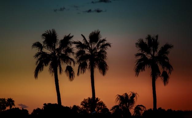 Silhouette von palmen bei sonnenuntergang,