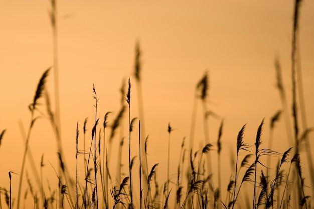 Silhouette von pflanzen bruncht auf einem sonnenuntergang