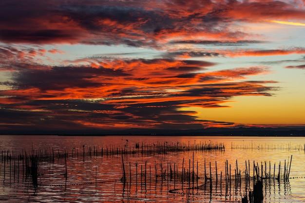 Silhouette von vögeln, die auf polen in der dämmerung in der albufera in valencia, einer süßwasserlagune stehen.