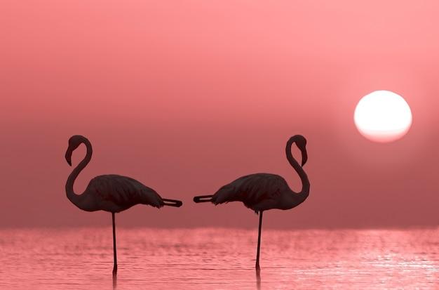 Silhouette von zwei flamingos steht in einer lagune vor einem hintergrund von goldenem sonnenuntergang und strahlender sonne