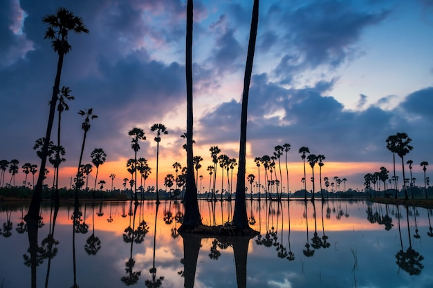Silhouette zuckerpalmen mit reflexion über wasserteich und dämmerungshimmel im morgengrauen, dongtan samkok, provinz pathum thani, thailand. berühmtes reiseziel des warmen landes, siam.