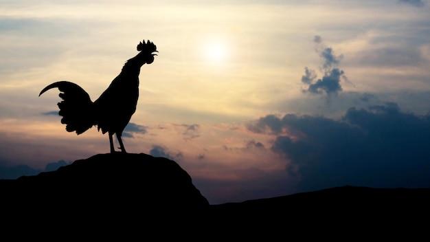 Silhouetten hahnkrähen am morgen