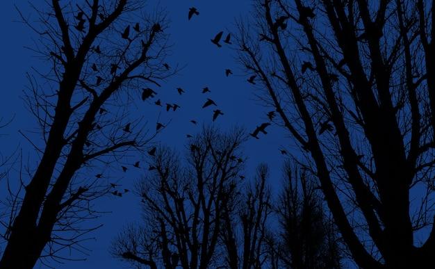 Silhouetten von bäumen und fliegenden vögeln auf dem hintergrund des abendhimmels
