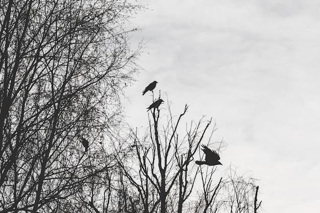 Silhouetten von krähen auf einem baum. düstere gruselige vögel auf einem baum.
