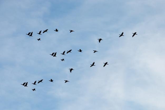 Silhouetten von vögeln auf dem blauen himmel fliegen