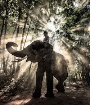 Silhouettieren sie elefantentrekking durch in den strahlen des lichtes, thailand.