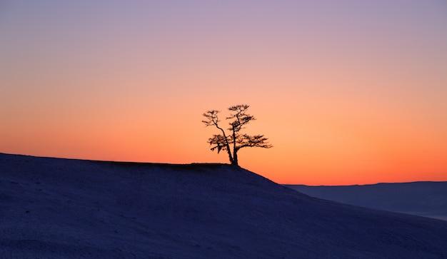 Silhouettieren sie großen baum im sonnenuntergang am baikalsee, olkhon-insel, sibirien in russland. winterzeit