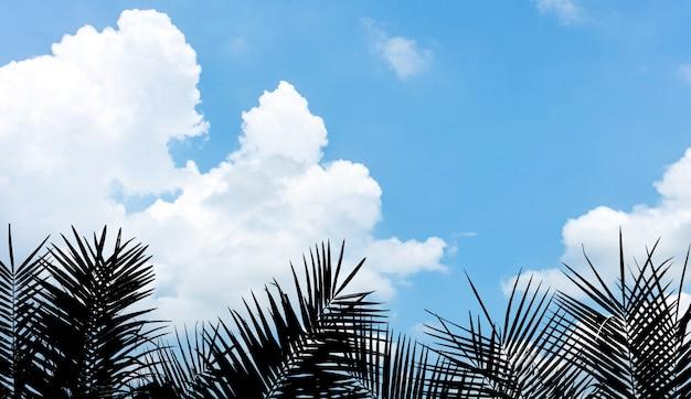Silhouettieren sie palmblatt auf blauem himmel mit wolke im sommer