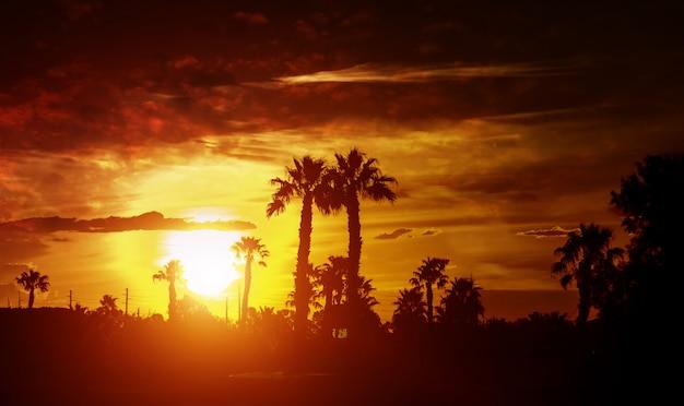 Silhouettieren sie palmen auf sonnenuntergang während eines tropischen sonnenuntergangs