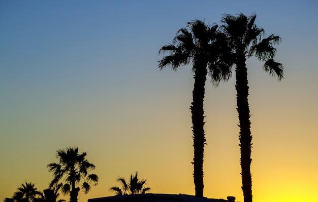 Silhouettieren sie palmen gegen am himmel während eines sonnenuntergangs.