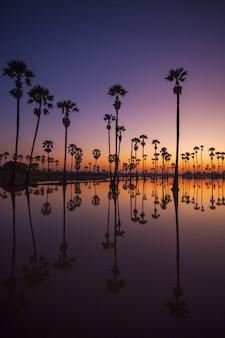 Silhouettieren sie sugar palm tree auf dem reisfeld vor sonnenaufgang. reflexion über das wasser.