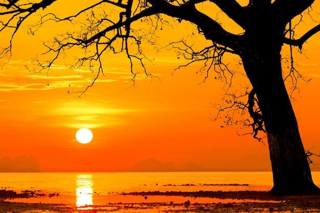 Silhouettiert vom toten baum im sonnenuntergang in dem meer.