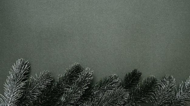 Silvester-flatley. weihnachtsbaumzweige, auf einem einfarbigen grünen hintergrund. leerer platz für ihre anzeige oder ihren text.