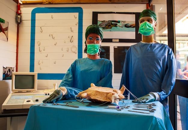 Simulation mit puppen einer schildkrötenoperation