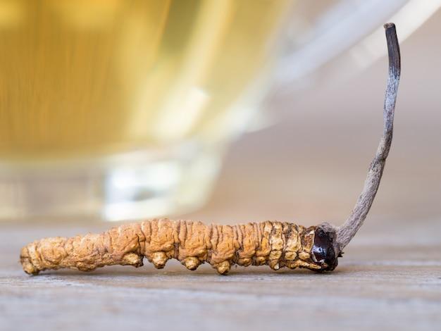 Sinensis oder champignoncordyceps dies ist eine kräuter, die vor einem glas cordycepswasser platziert wird.