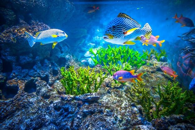 Singapur-aquarium