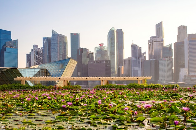 Singapur-skyline des geschäftsgebiets und der marina bay am tag, vordergrund mit lotosteich, singapur