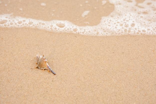 Single shell am strand