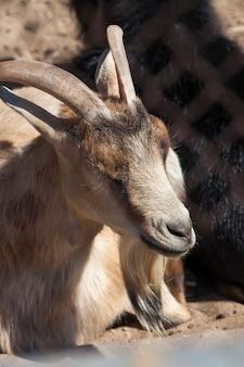 Sitzen hinter einer metallgitterziege in einem zoo, nahaufnahme eines teils eines tieres