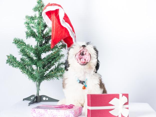 Sitzende seite des offenen munds des hundes auf dem baum weihnachten mit weißem hintergrund