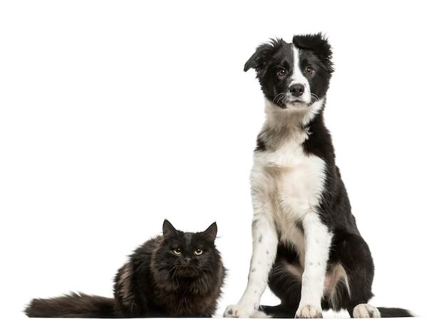 Sitzender border collie-hund und eine katze, die sich hinlegt