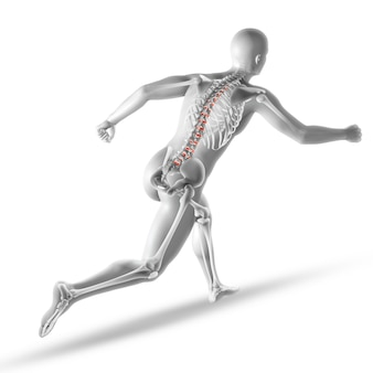 Skeleton anatomie
