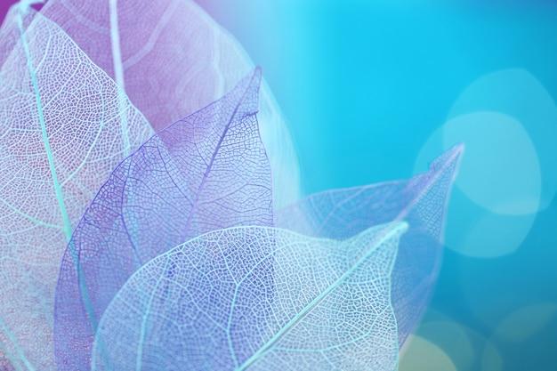 Skeleton blue leaf set macro