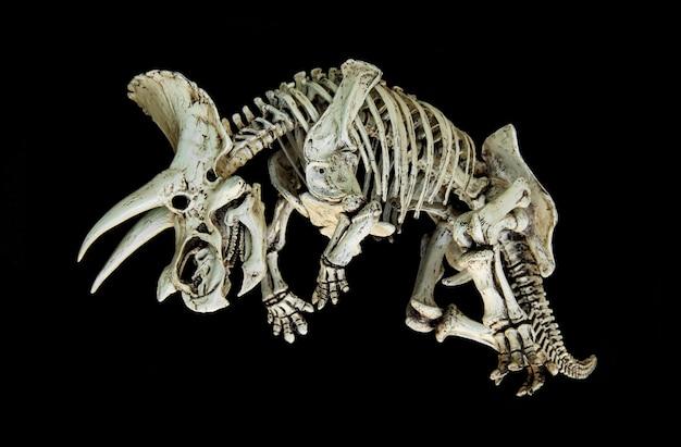 Skeleton dinosaurier triceratops.