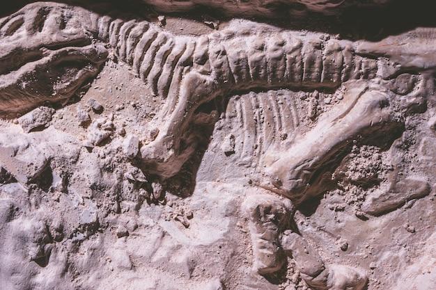 Skelett des dinosauriers. tyrannosaurus rex-simulatorfossil im grundstein.