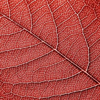 Skelett des natürlichen blattes, muster der blätter mit adern. kreativer hintergrund für ihre ideen in einer farbe living coral. draufsicht