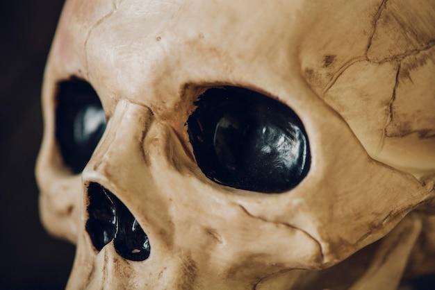 Skelett in nahaufnahme