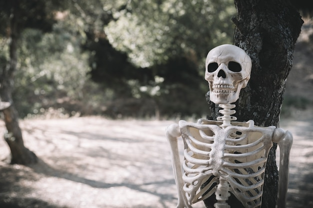 Skelett lehnte sich auf baum im park