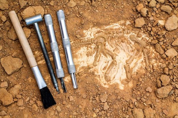 Skelett und archäologische werkzeuge