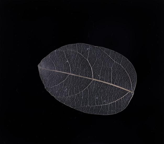 Skelettblätter blumenkomposition auf schwarzblauen blättern