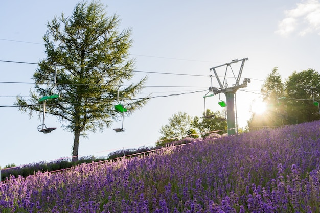 Skiaufzugstühle, die auf den berg in choei-lavendelbauernhof bei sonnenuntergang und sonnenlicht in furano, hokkaido, japan umziehen.