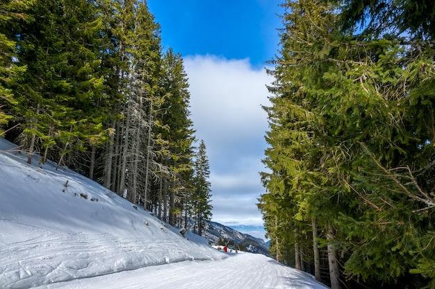 Skigebiet an einem sonnigen wintertag. ein pfad führte durch einen wald mit hohen, dichten tannen