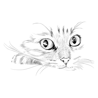 Skizzen der katze