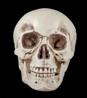 Skull prop psd-datei