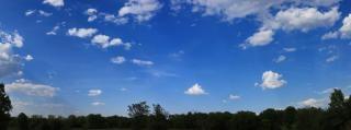 Sky und baumkronen