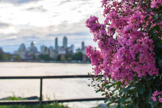 Skyline von new york city durch rosa blumen