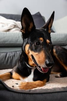 Smiley-hund sitzt in seinem bett