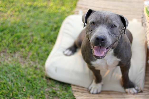 Smily hund