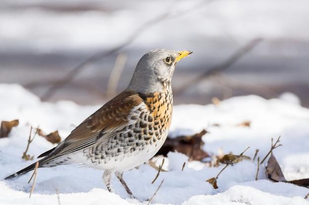 Snowbird im schnee