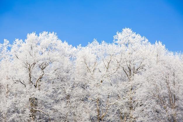 Snowy-bäume im winterwald auf hintergrund des blauen himmels. schön w