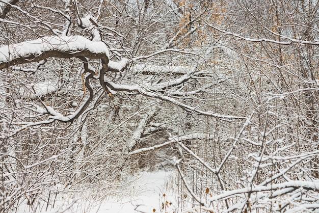 Snowy-weg unter baumasten im parkland