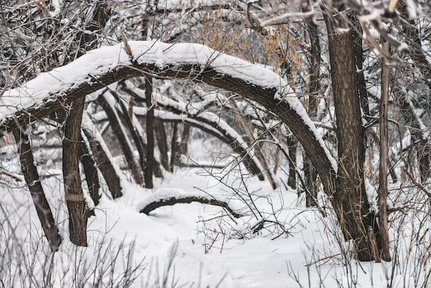Snowy-weg unter baumasten im parklandabschluß oben.