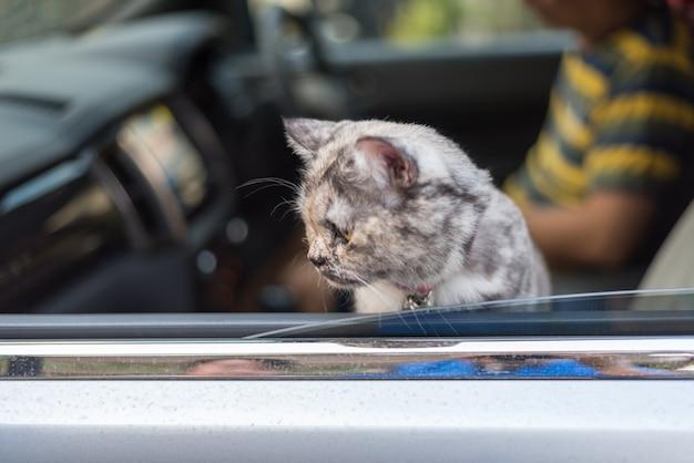 So niedliches sitzen der katze innerhalb eines autos warten auf reise