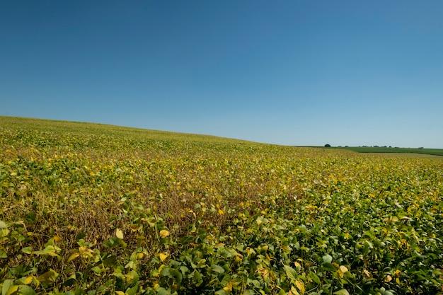 Sojabohnenplantage an einem sonnigen tag in brasilien.