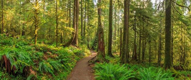 Sol duc rainforest farns olympic nationalpark usa Premium Fotos