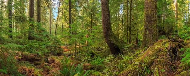 Sol duc rainforest farns olympic nationalpark usa